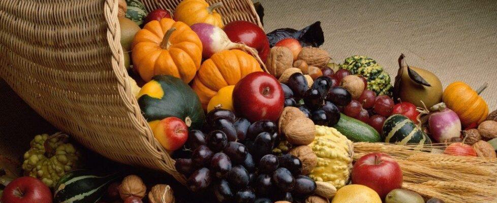 bountiful-harvest-1024x768