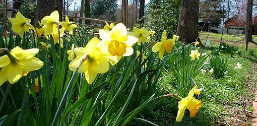 spring-bulb-planting-depths-1